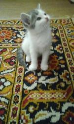 подарую кошенят