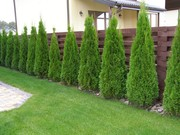 Ландшафтный дизайн, рулонный газон