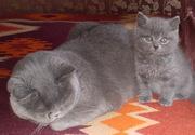 Продам плюшевых котят